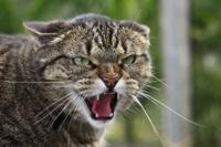 Приставы выставили на улицу кота с трудным характером