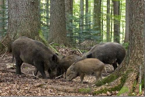 Полицейские поймали на Тамбовщине двух браконьеров