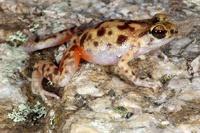 В Австралии нашли три новых вида животных