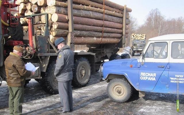 Полиция и управление лесами вместе охраняют деревья