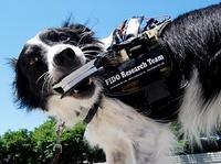 Google разработает мессенджер для служебных собак