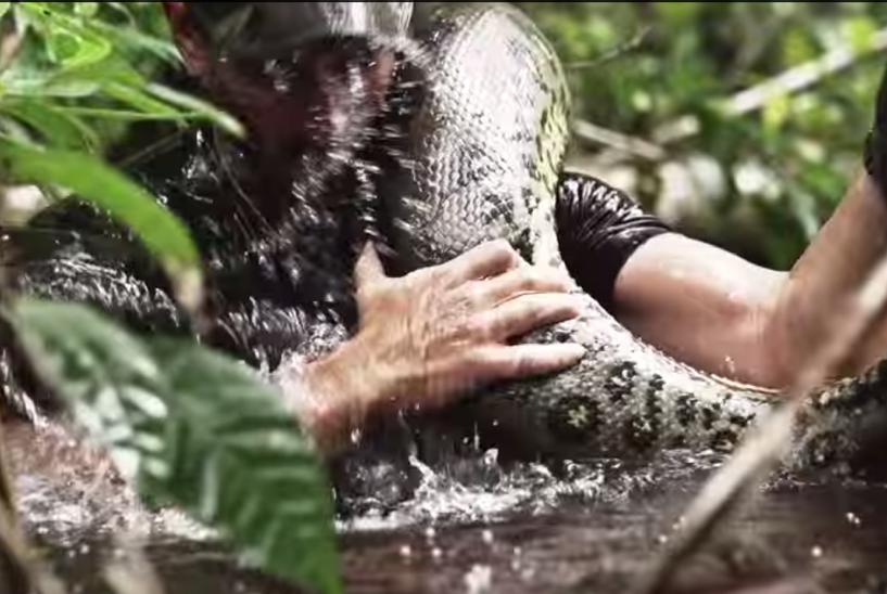 Discovery в прямом эфире скормит анаконде живого человека