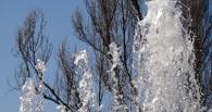 Некоторые фонтаны в Тамбове уже заработали