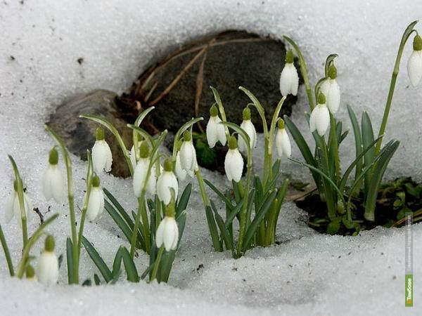 Весна на Тамбовщину придет с запозданием