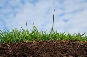 Ученые Российской академии сельхознаук будут консультировать тамбовские власти