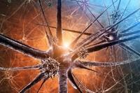 Российские ученые впервые нашли вирус в вечной мерзлоте