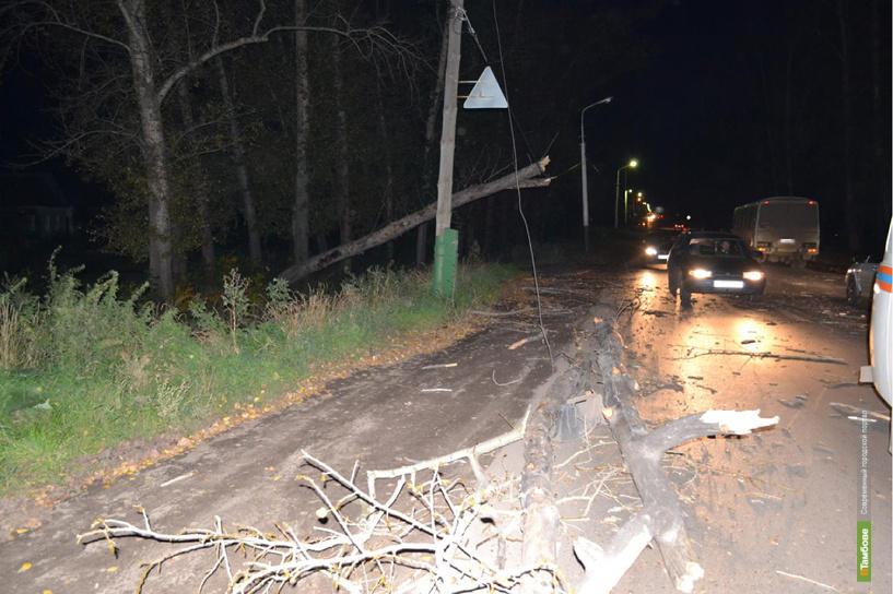 В Мичуринске на иномарку рухнуло дерево