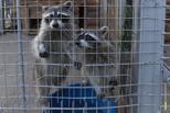 Вольеры в сумерках, или как в зоопарке ТГУ прошла акция «Ночь музеев»