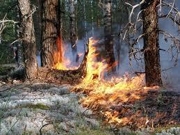 На Тамбовщине стали возникать первые лесные пожары