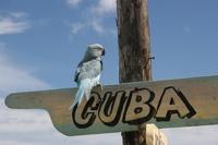 Банк Кубы разрешил закладывать по кредитам коров и картины