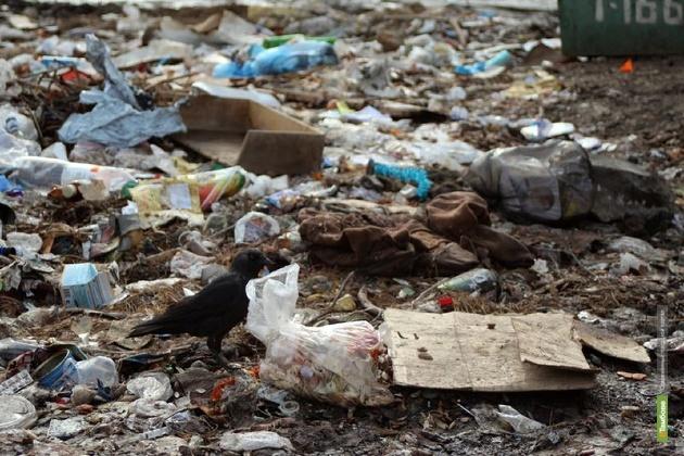 Власти Тамбова устроили рейд по городским свалкам