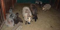 В зоопарке ТГУ прошла «Ночь в музее»