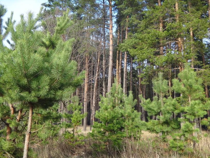 Школьные лесничества на Тамбовщине будут развиваться