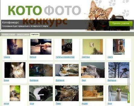 «Котофотоконкурс» от ВТамбове приближается к завершению