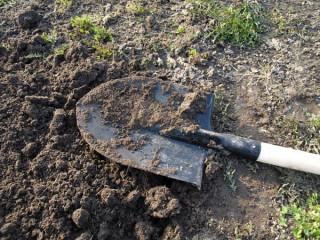 Тамбовчане откопали на своем участке останки 4 человек