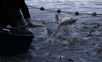 Популяция рыб и рептилий стремительно сокращается