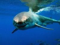 Несколько тысяч австралийцев вышли на митинг против убийства акул