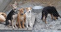 Для бездомных животных в Котовске построят приют
