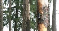В Тамбовской области расставили «ловушки» на браконьеров