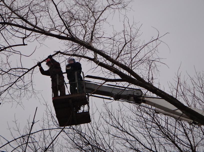 В Тамбове спилят деревья, представляющие опасность для прохожих