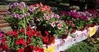 В Тамбове пройдет конкурс цветочных шляп