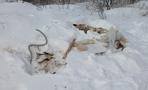 На всероссийскую карту свалок попали три тамбовские мусорные кучи