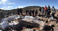 Ученые нашли в Аргентине «кладбище динозавров»