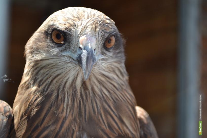 В лесах Тамбовщины стало больше зверей и птиц
