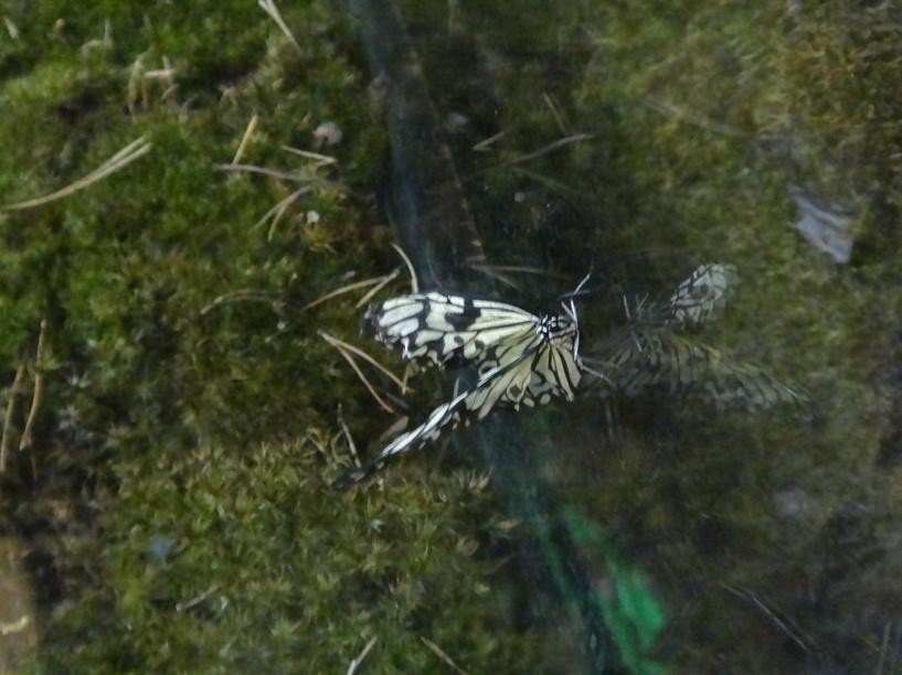 В тамбовском зооботаническом центре можно увидеть тропических бабочек