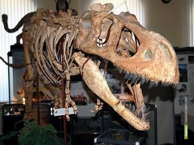 Останки динозавров нашли временное пристанище в Тамбове