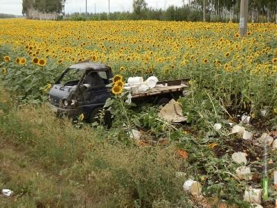 На Тамбовщине Hyundai слетел с трассы в поле с подсолнухами