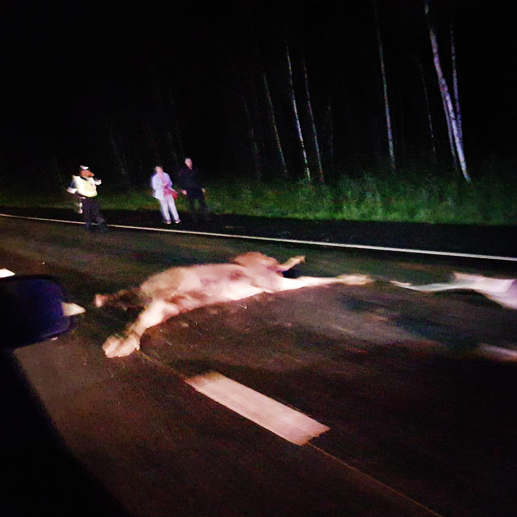 НаРассказовском шоссе сбили лося