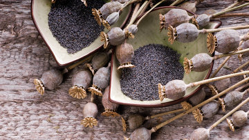Мичуринские полицейские изъяли более килограмма растений мака