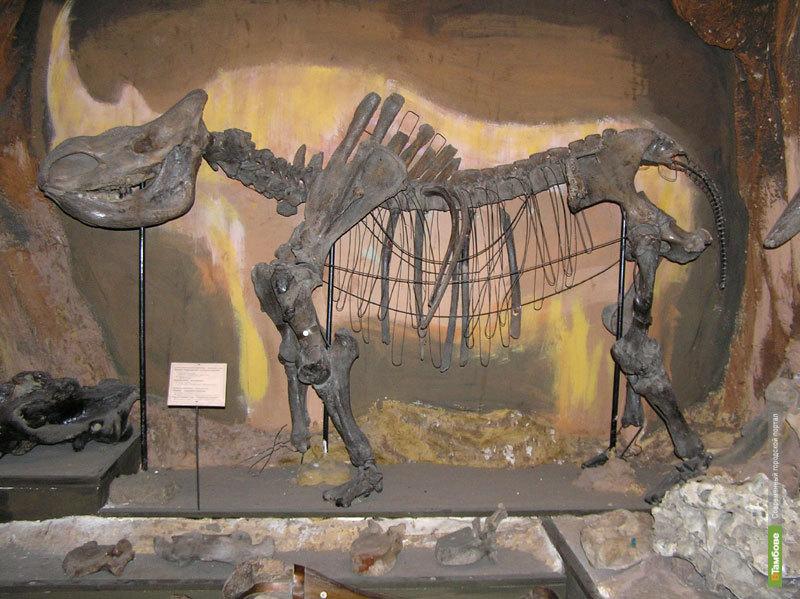 Шерстистый носорог столкнул лбами тамбовских ученых