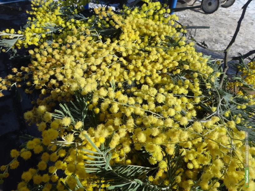 На прилавках тамбовских цветочниц появились мимозы