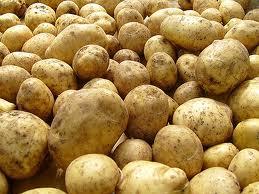 Производство тамбовского картофеля поставили на поток