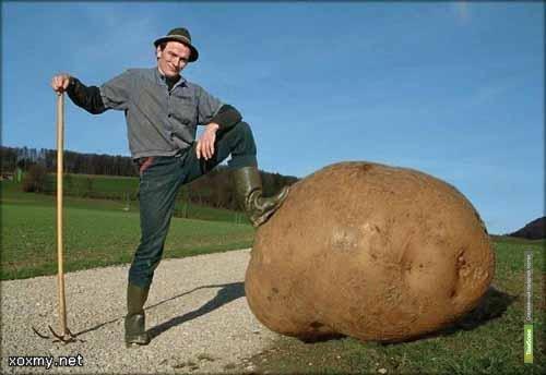 """""""Зелёная долина"""" накормит тамбовчан голландской картошкой"""