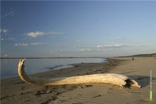 Палеонтологи предположили, что на территории Тамбовщины был огромный ледник