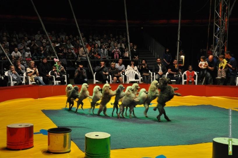 Юные тамбовчане попадут на цирковое представление бесплатно