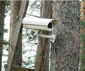 На Тамбовщине установили четыре точки мониторинга леса