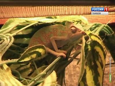 В экзотариум державинского зоопарка подселили новых обитателей