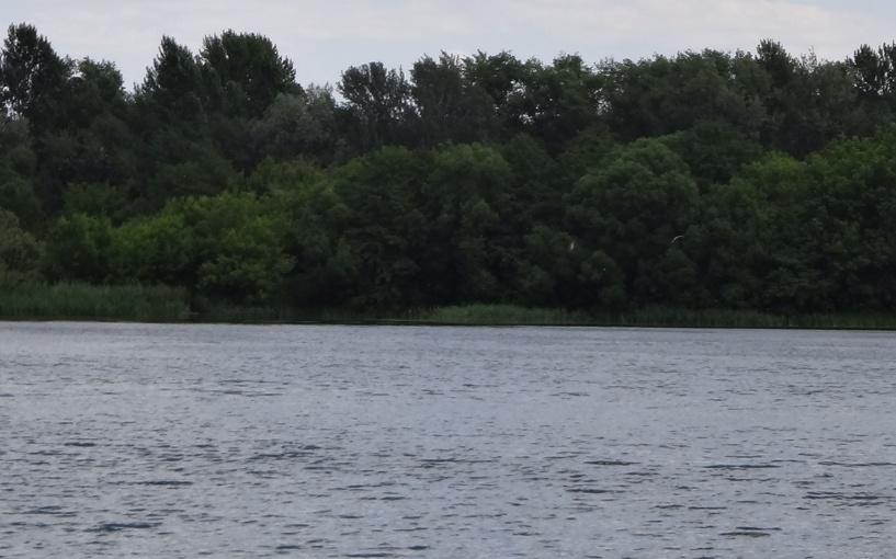 В Моршанском районе утонула женщина