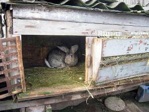 Тамбовчанин украл у односельчанки 9 кроликов