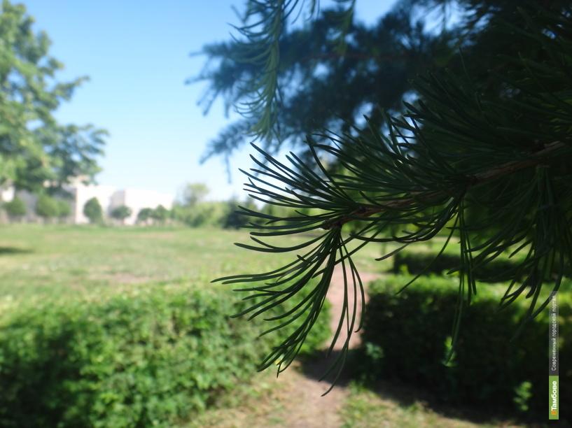 Тамбовский поэт-лирик выпустил сборник стихов «Деревенские картинки»