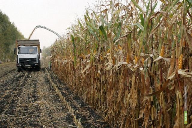 В Тамбовской области начали уборку кукурузы