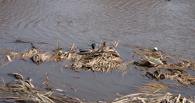 Минприроды России оценило вклад Тамбовщины в расчистку водных объектов
