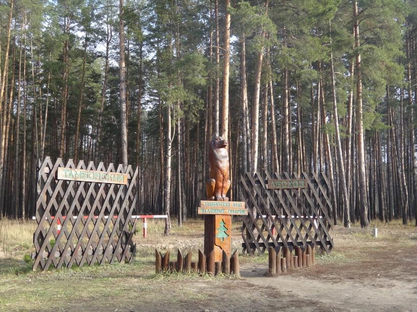 Тамбовские лесоводы поделились опытом с коллегами из других городов