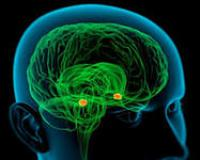 Ученые выяснили, какая часть мозга отвечает за старение
