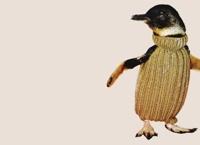 Пингвинов Новой Зеландии переодевают в свитера