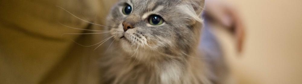 Возьми из приюта: кот Бегемот и другие мурчащие обитатели «Доброго сердца»